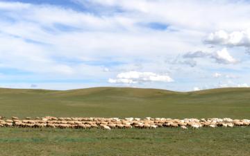 Brazil to resume beef exports to China, Saudi Arabia