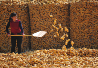 Chinas DCE, Orient Futures launch agricultural-product index