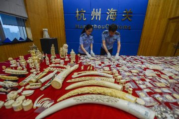 China imposes one-year ban on ivory imports as hunting trophies