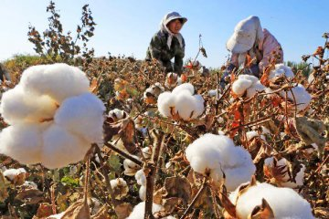 Chinese target price program on cotton, soybean proceeds well