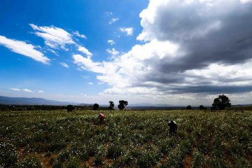 Chinese firm to start laying of Kenyas SGR track lanes in November