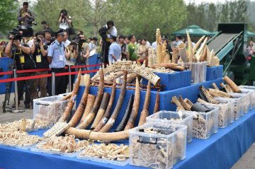 East China police seize 600 kg of illegal ivory