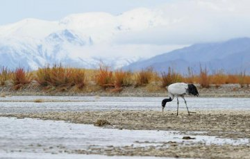 Report issued on environment change of Tibetan plateau