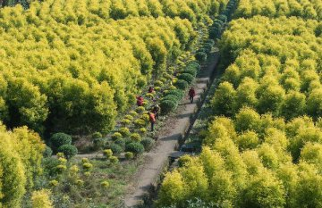 Across China: More agricultural firms invest in central Asia