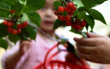 Chilean fruits reach NE China by charter flight