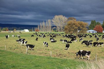 Dairy price plunge drives call for cut in New Zealand interest rates