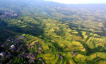 China Guangxi Terraced Fields Autumn Scenery