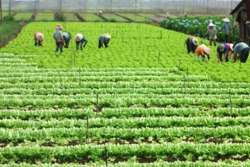 China, Serbia sign MOU on agriculture