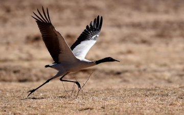China Yunnan Black Necked Cranes Nature Reserve