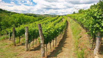 Slovenia, Hong Kong sign MOU on wine trade cooperation