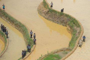 China Yunnan Rice Transplanting