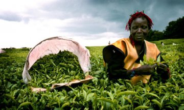 Kenya, China to ink deal on tea trade in July