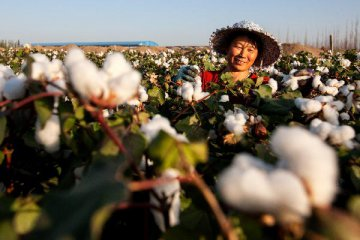 China greenlights launch of cotton yarn futures