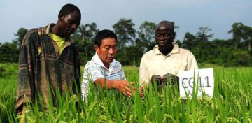 Tech transfer key to China-Africa agricultural cooperation: FAO official