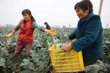 China to expand rural land ownership reform