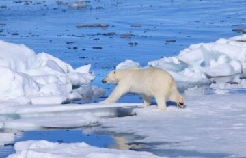 """China publishes Arctic policy, eyeing vision of """"Polar Silk Road"""""""