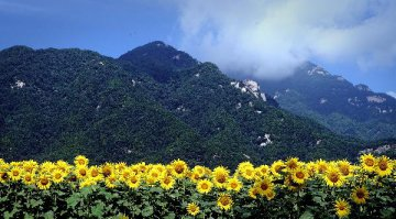 Rich Chinese show rising optimism on economy, survey