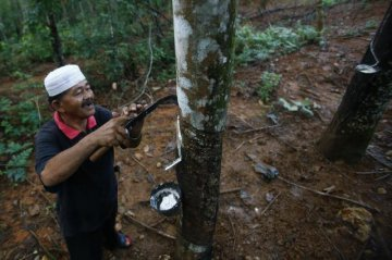Malaysias natural rubber production falls 2 pct in January
