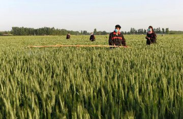Chinese agricultural firms expand along Belt and Road