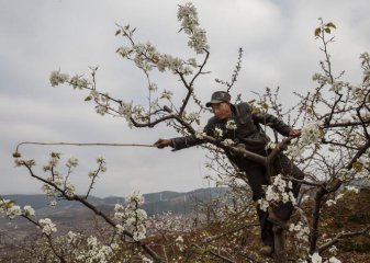 Sichuan becomes Chinas top beekeeping province