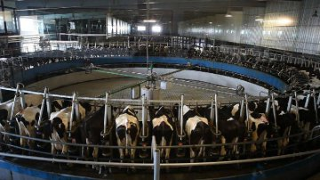 ​China increase input on education, boost dairy industry and service trade