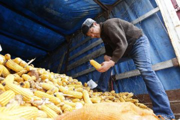Chinas corn imports surge in April