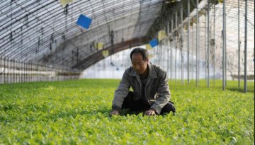 ​China approves 21 national modern agricultural industrial parks