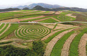 Guizhou-Taiwan agricultural cooperation in the fast lane