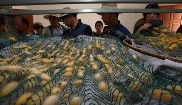 Cambodia, China team up to boost local silk sector
