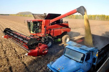 Chicago soybean futures plunge over 4 pct weekly