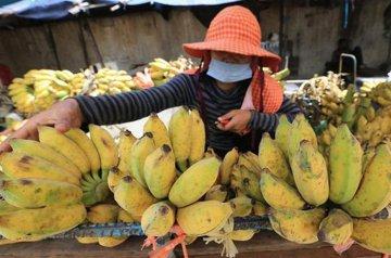 Cambodia approves China investment in banana farm