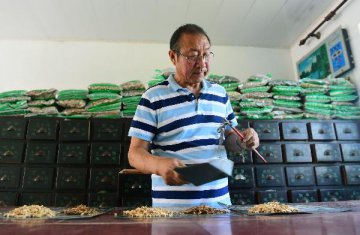 TCM exports up as local firms ride B&R Initiative