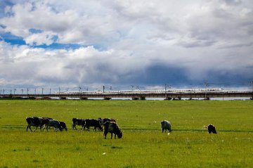 Inner Mongolia eyes opportunities through Silk Road