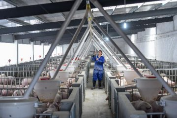 Outbreaks of African swine fever reported in China