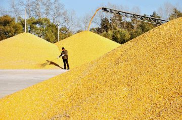 ​Good harvest expected to help cope with risks