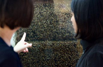 Chilean honey eyes Chinas market