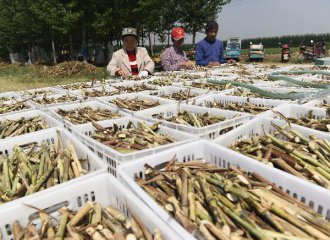 Chinas farm produce prices continue to climb