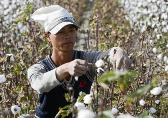 Chinas cotton output continues growth in 2018
