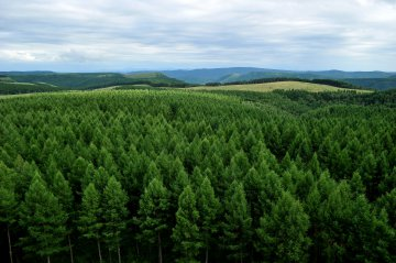 China becomes greener with notable achievements in afforestation: official