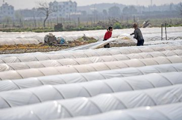 Xinjiang ensures loans for spring farming