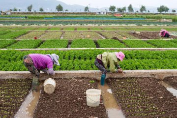 China makes progress in agricultural green development
