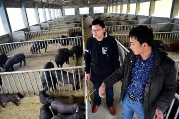 Swine Fever in China, stock fever at WH Group