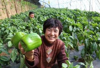 Chinas weekly farm produce prices slightly retreat