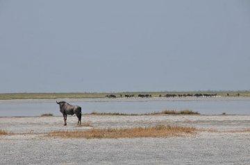 Botswana resort town seeks partnership with Chinese companies