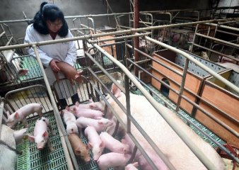 S.Korea reports 2nd confirmed case of African swine fever
