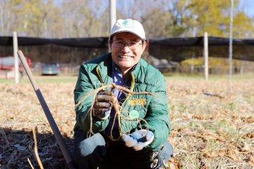 Feature: Worries of an American ginseng farmer