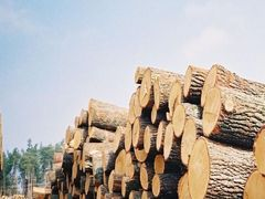 Chinas import of log in August 2014