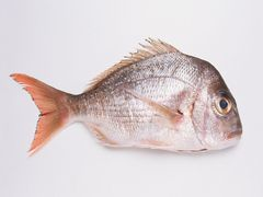 Chinas import of fish meal in August 2014