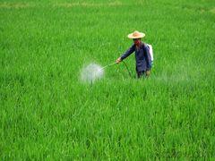 Chinas pesticide sector keeps firm profitability