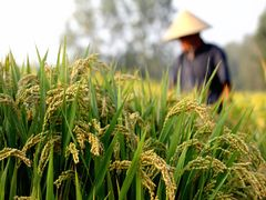 China Oct. grain imports down 36.22 pct m-o-m to 1.25 mln t, customs